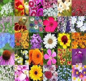 Wildflower mix 100% seed 1/4 POUND LB SEEDS x 30 TYPES