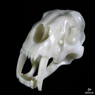 AWESOME White Jade SABER TOOTH TIGER Skull 7.3
