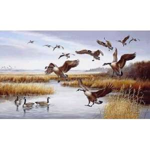 Maynard Reece   Careful Landing Canada Geese Artists