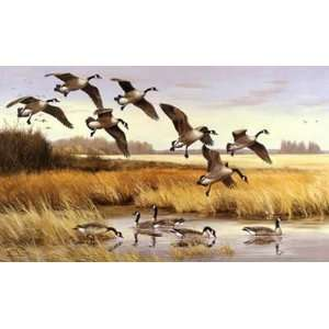 Maynard Reece   The Quiet Place Canada Geese Home