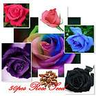 50 Rose Seeds Blue Red Purple Pink Black Rainbow Petal Plants Home